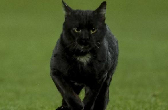 视频-球场惊现神秘黑猫! 满场飞奔大秀优美身姿