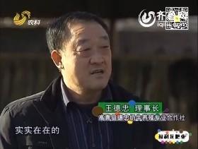 山东养殖状元大赛——王德忠:爱唱歌的牛倌