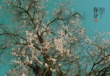 24节气--春分宣传片