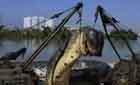 辽宁挖出140岁巨蟒