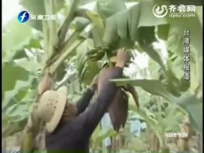 香蕉艾滋病全球蔓延 科学家警告全球恐无蕉