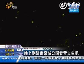 晚上到济南泉城公园看萤火虫吧