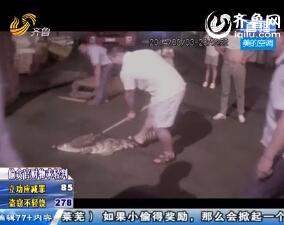 临沂:鳄鱼街头乱窜吓坏路人 警民联合制服
