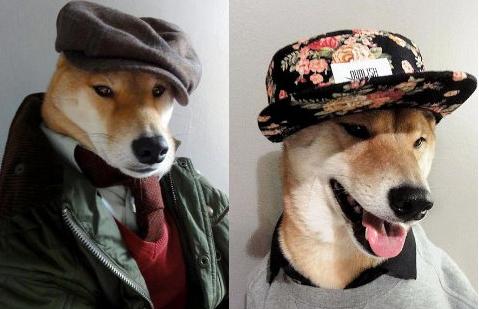 汪星高富帅:月入九万的狗秒杀小白领