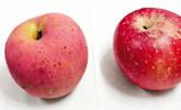 """苹果烫洗10分钟后渗出""""血滴"""" 专家称正常!"""