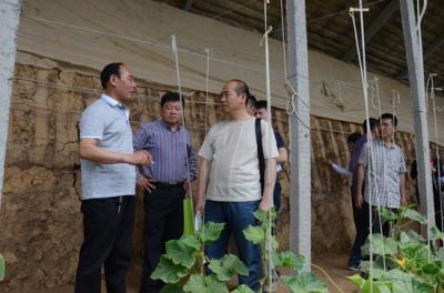 """""""天下蔬菜看兰陵""""采访团走进兰陵县蔬菜生产基地"""