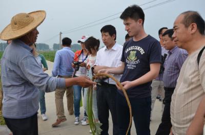 """全国媒体聚焦蔬菜产业""""苍山现象""""采访团走进牛蒡基地"""