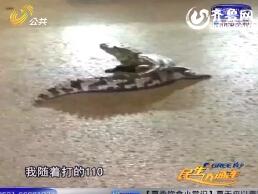 菏泽:深夜鳄鱼惊现街头 原是商家无证私养