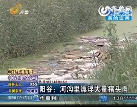 三线环境治理:阳谷河沟里漂浮大量猪头肉