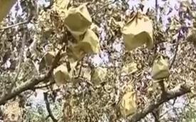 烟台莱阳旱情:水库见了底 20年的苹果树撑不住了