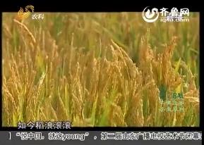 20151015《农科直播间》:走进农科院、分享新科技(1)旱稻直播