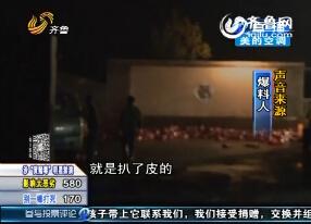 潍坊:非法收购狐狸尸体?记者调查