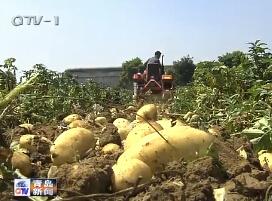 青岛市部署扶贫产业开发项目推进工作