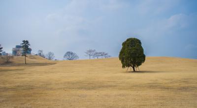看树6分钟有助于减轻压力