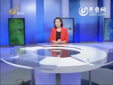 金领农民:山里人 吕大姐