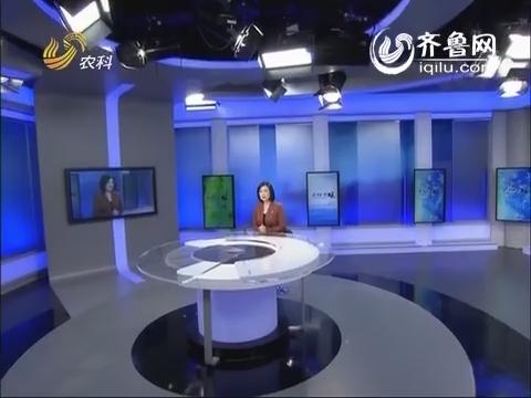 金领农民 李强:剑走偏锋做道具