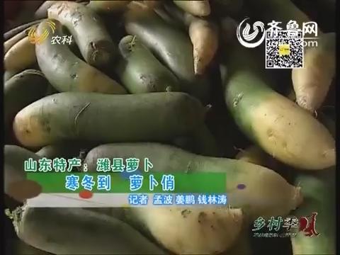 山东特产:潍县萝卜
