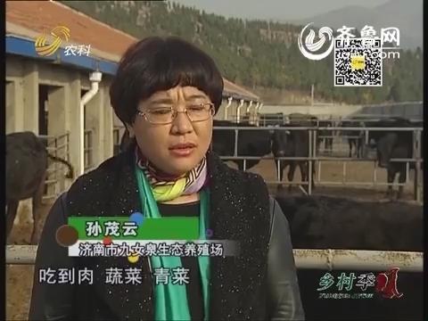金领农民 孙茂云:时尚女牛倌