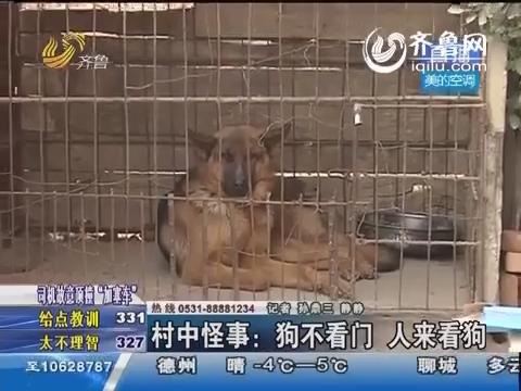 济阳:村中怪事 狗不看门 人来看狗