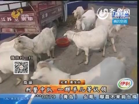 菏泽:刑警中队 一群羊儿等认领