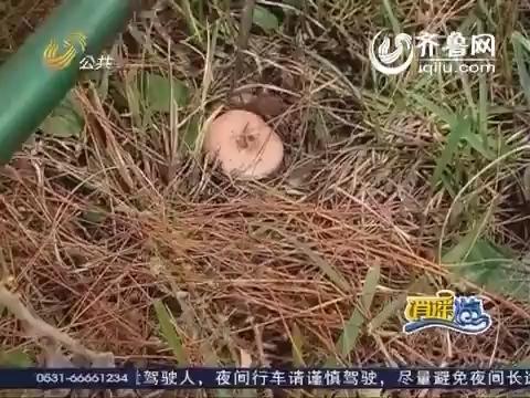 2014年02月07日《逍遥游》:春节特辑 荔波之旅
