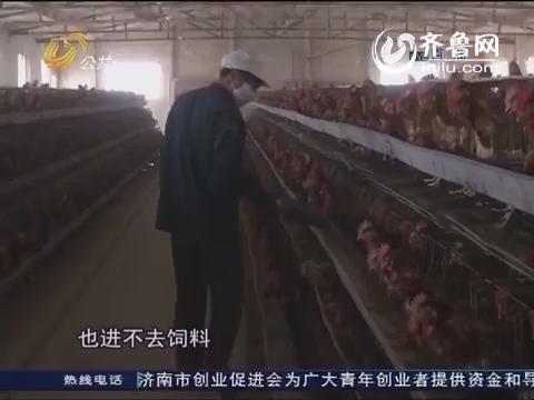 """滨州:莫名沟渠阻进出 两万只鸡不""""淡定"""""""