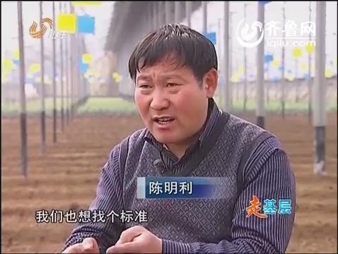 【走基层】能人陈明利(二):鲤鱼跳龙门