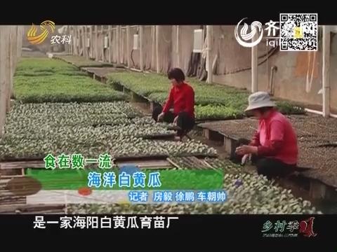 食在数一流:海阳白黄瓜