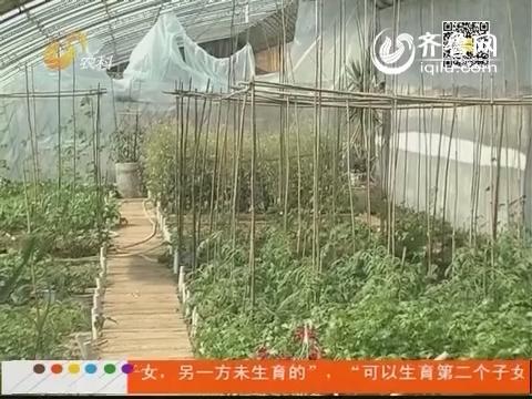 济南:包块土地去种菜