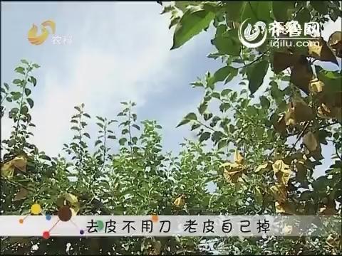 苹果树什么时间施底肥