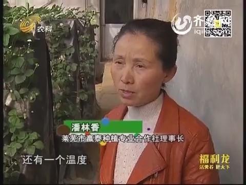 芭田杯2014山东合作社长打擂台(四):潘林香种草莓 吃饱不浪费