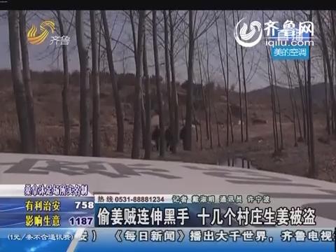 莱芜:偷姜贼连伸黑手 十几个村庄生姜被盗