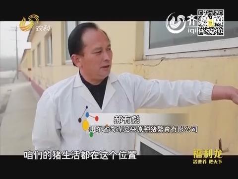 """2014山东养殖状元大赛:郝有彪:用""""数字""""养猪"""