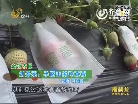 金领农民:刘景亮 半路出家种草莓