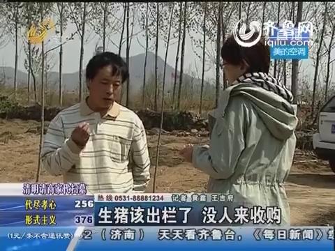 泗水县:生猪该出栏了 没人来收购