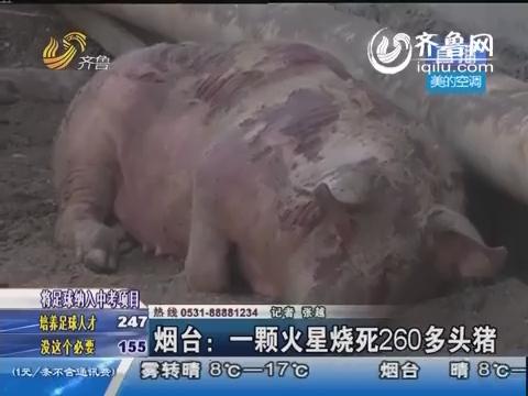 烟台:一颗火星烧死260多头猪