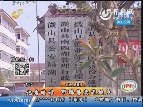 济宁:记者暗访 野鸭售卖还挺多