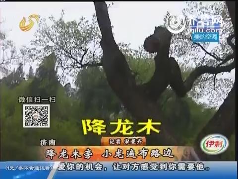 """济南:彩石镇降龙木旁群蛇出没 专家提示小心""""死蛇"""""""