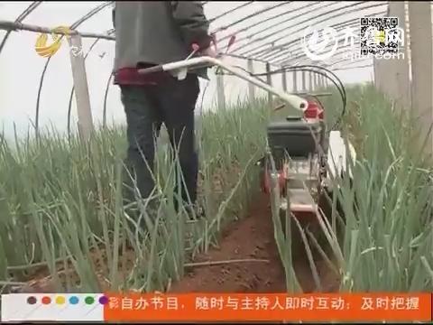 章丘:大葱种植实现全程机械化