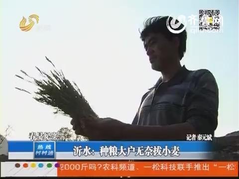 沂水:种粮大户无奈拔小麦