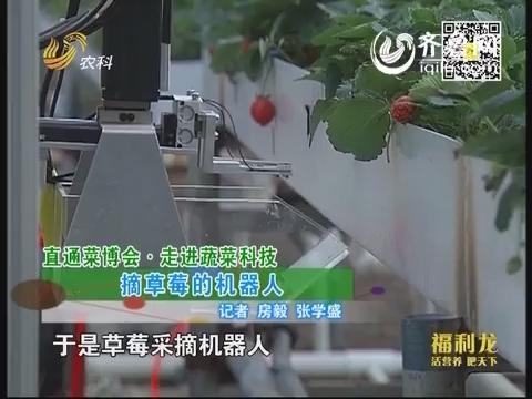 直通菜博会·走进蔬菜科技:摘草莓的机器人