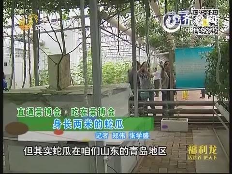 直通菜博会吃在菜博会:身长两米的蛇瓜