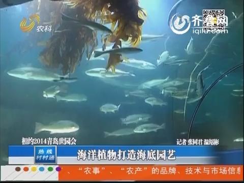 相约2014青岛世园会:海洋植物打造海底园艺