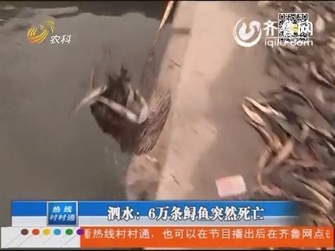 泗水:6万条鲟鱼突然死亡