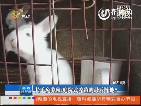 长毛兔养殖:庭院式养殖的最后阵地