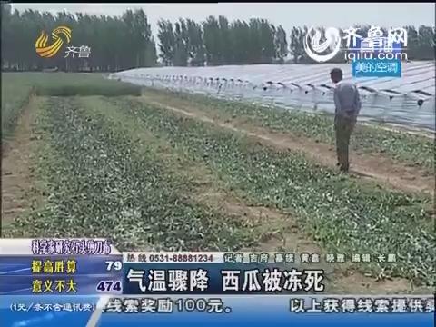 费县:气温骤降 西瓜被冻死