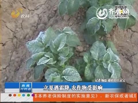 山东:立夏遇霜降 农作物受影响