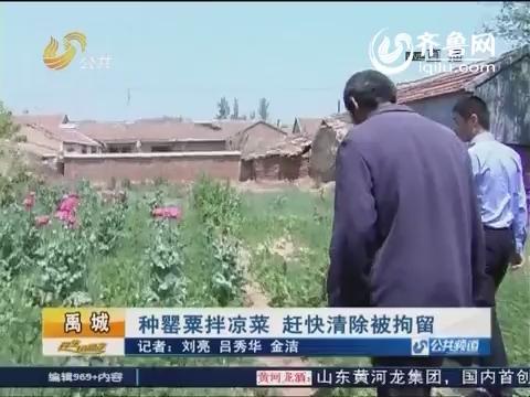 禹城:种罂粟拌凉菜 赶快清除被拘留
