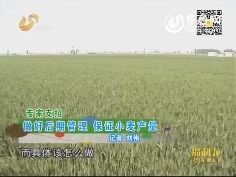 专家支招:做好后期管理 保证小麦产量