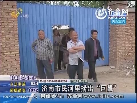 """济南市民河里捞出""""巨鼠"""""""
